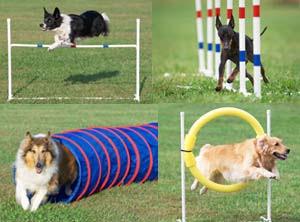 how-to-Dog-agility-training