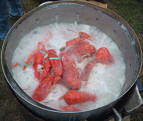 lobsters should not be included on the menu Easily order maine lobster shipped directly to your door as early as tomorrow enjoy fresh lobsters on any occasion from lobstercom.