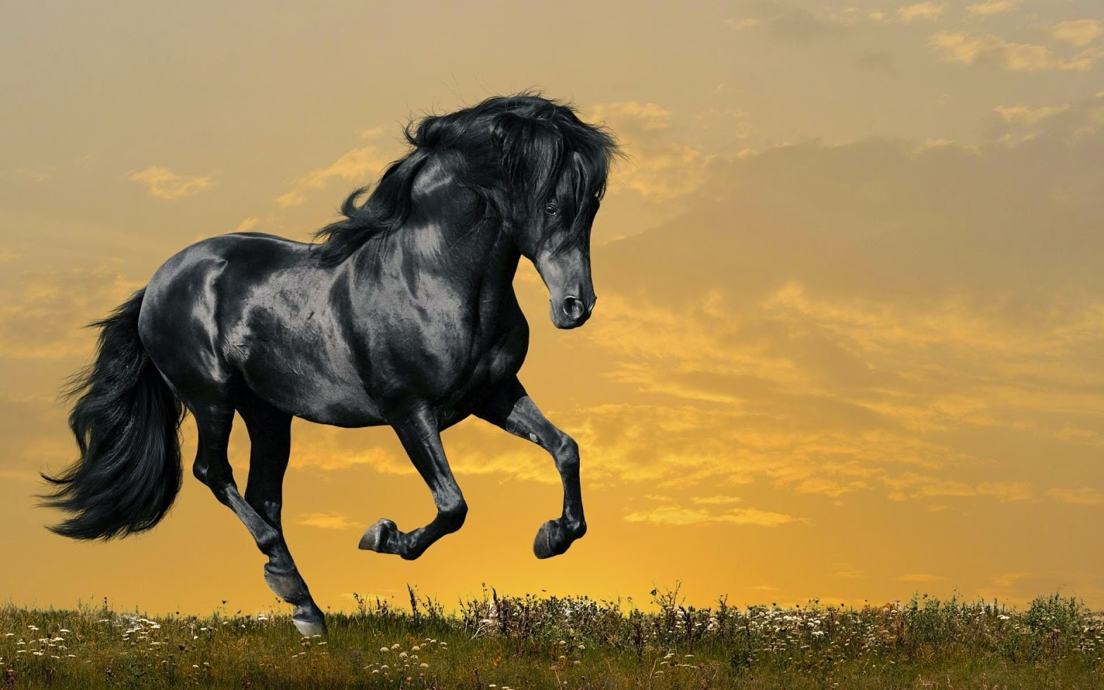 Download   Wallpaper Horse Yellow - beautiful_black_horse_wallpaper_hd  Picture_1007866.jpg