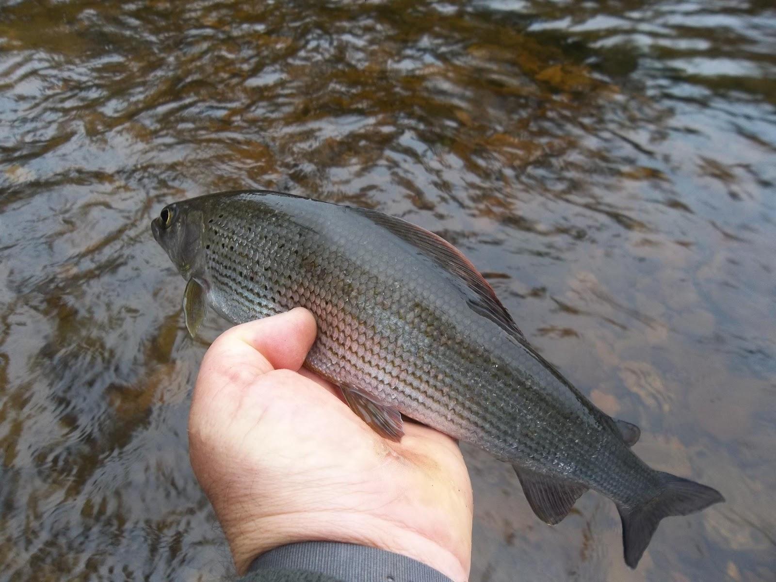 The flee float 2 hours fishing go for Fish 2 flirt
