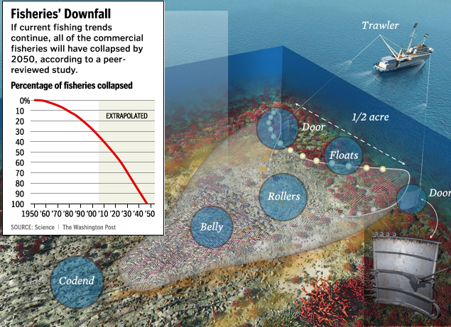 Impacts of Bottom Trawling - Oceana