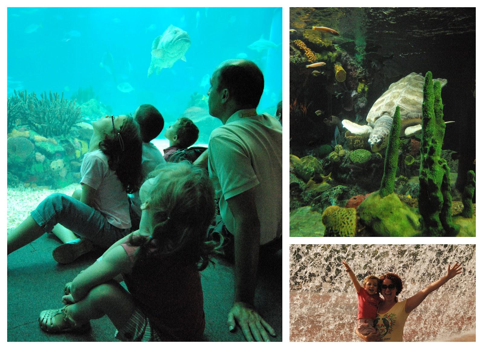 #04BDC7 Todo mundo sentado observando o grande aquario a tartaruga gigante da  1600x1155 px tamanho banheiro adaptado