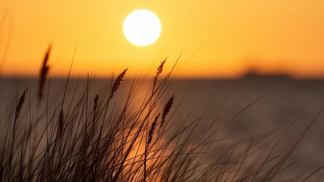 Sunset grass seascape HD Wallpaper