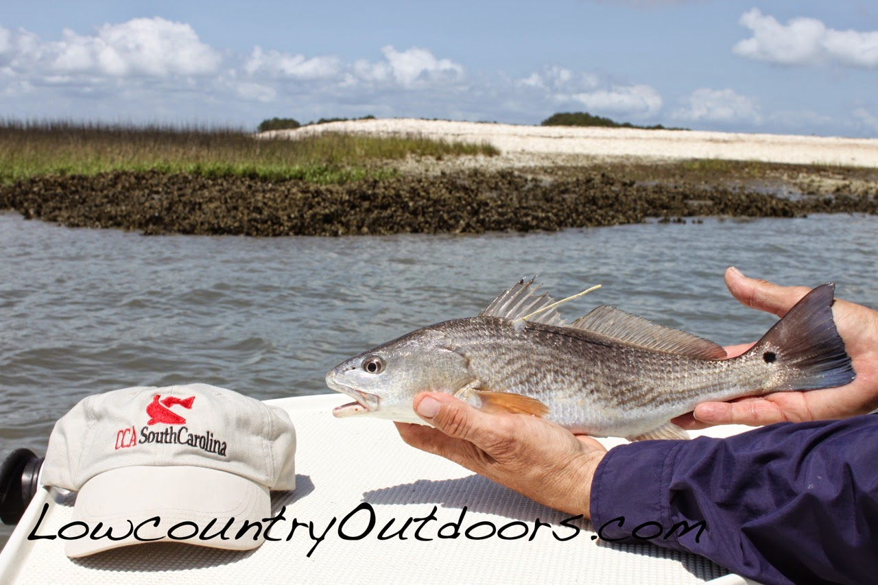 Lowcountry outdoors for Sc saltwater fishing report