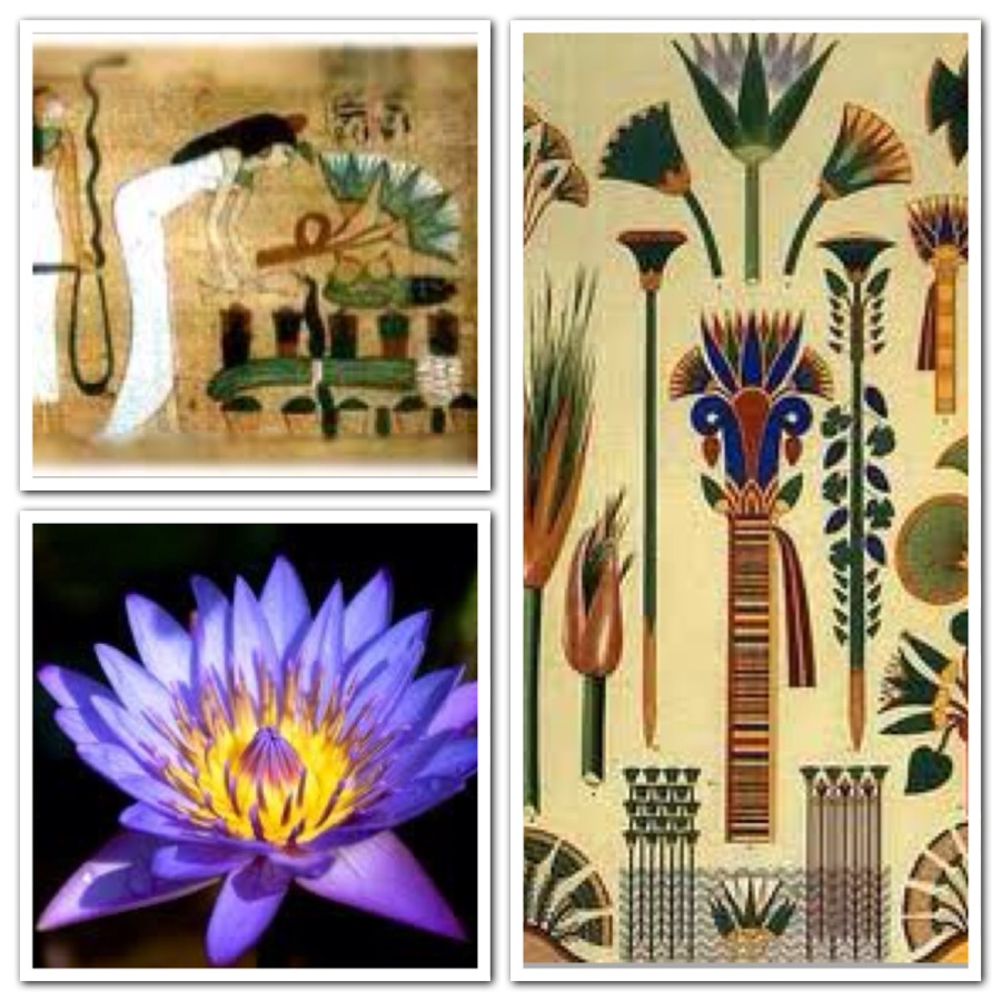Pouparina flowers it all started in egypt the blue lotus is victoryofspiritoverthesences mightylinksfo