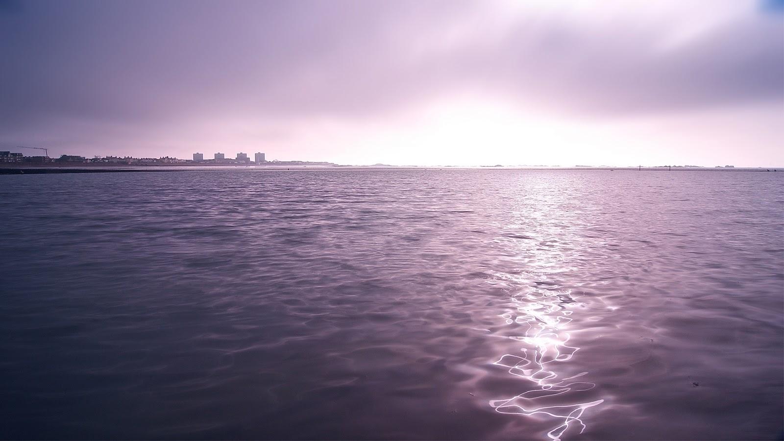 Purple Twilights