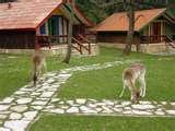 Parku Kombëtar i Llogarasë  Llogara