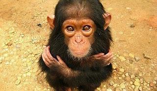 Animales Salvajes Bebes