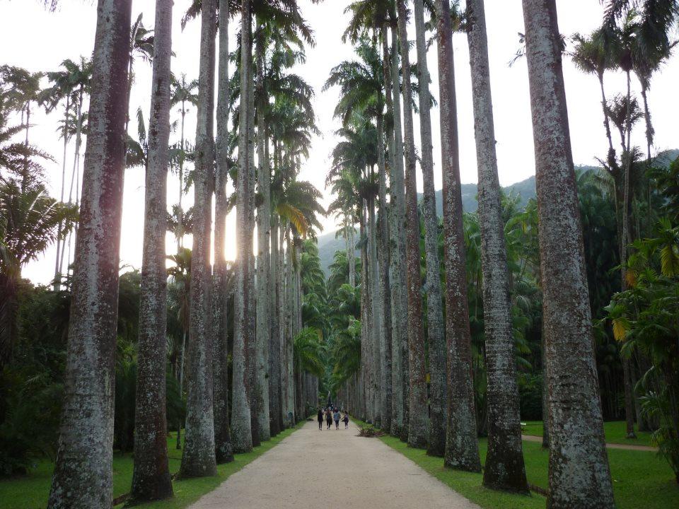 pedras jardim botanico:Rio de Janeiro, uma cidade mais que maravilhosa ~ Você realmente