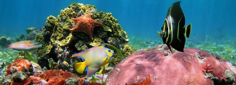 Tops 10 des activités à Cancún