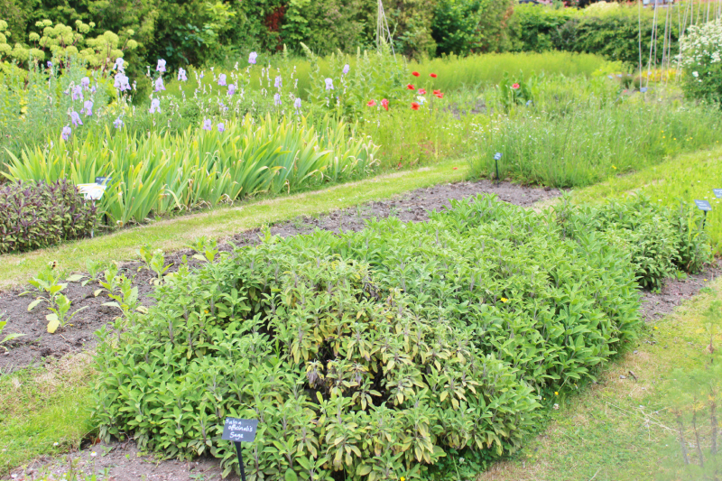 A day at the Weleda gardens in England - garden beds