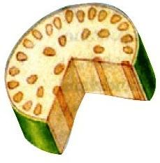 Berkas pengangkut batang monokotil