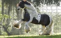Domesticated stallion