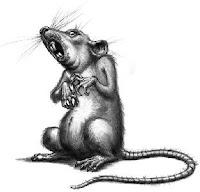 5 Kemiripan Koruptor Dengan Tikus