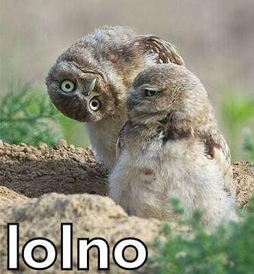 [Image: owl+01+-+burrowing.jpg]