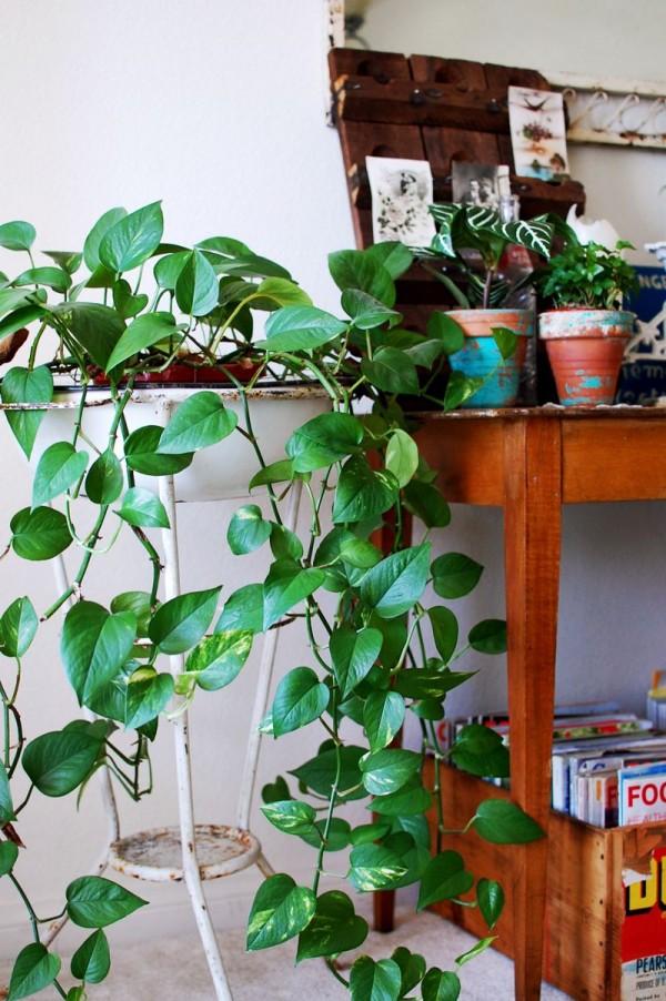 Retro y con encanto al menos una planta for Ideas para decorar interiores con plantas