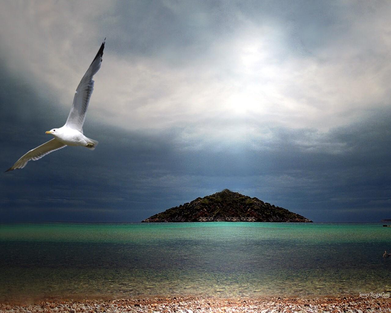 http://4.bp.blogspot.com/-qpUQ0-4YkuE/T3TEmy5O31I/AAAAAAAAG5k/8eEe4Pp3d38/s1600/Birds_9999532.jpg