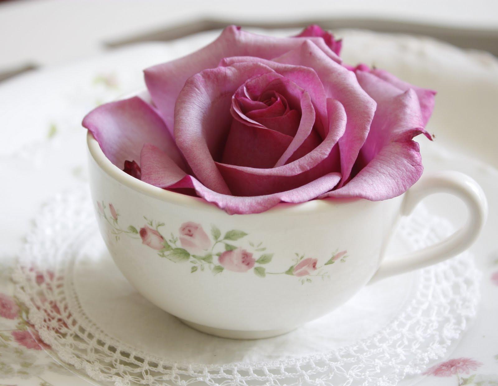 Мои заветные и дорогие цветы розы