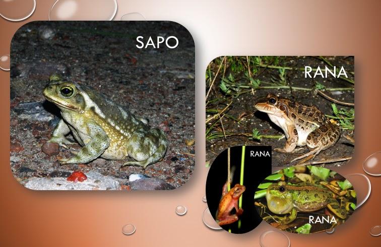 Anfibios, Conservación en Agroecosistemas: 2015