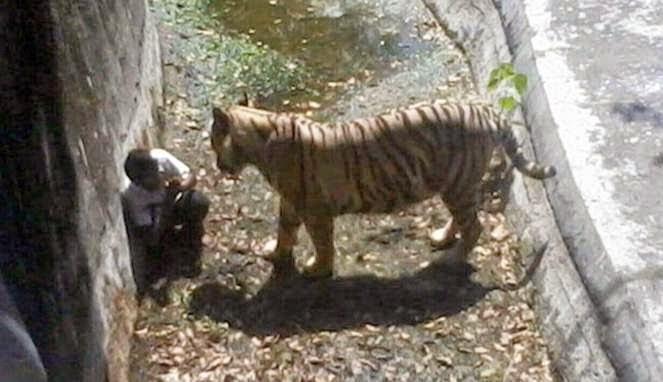 Video Harimau Putih Membunuh Pria India di Kebun Binatang Delhi