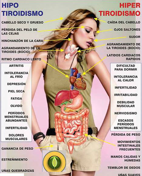 altas y bajas de peso tiroides