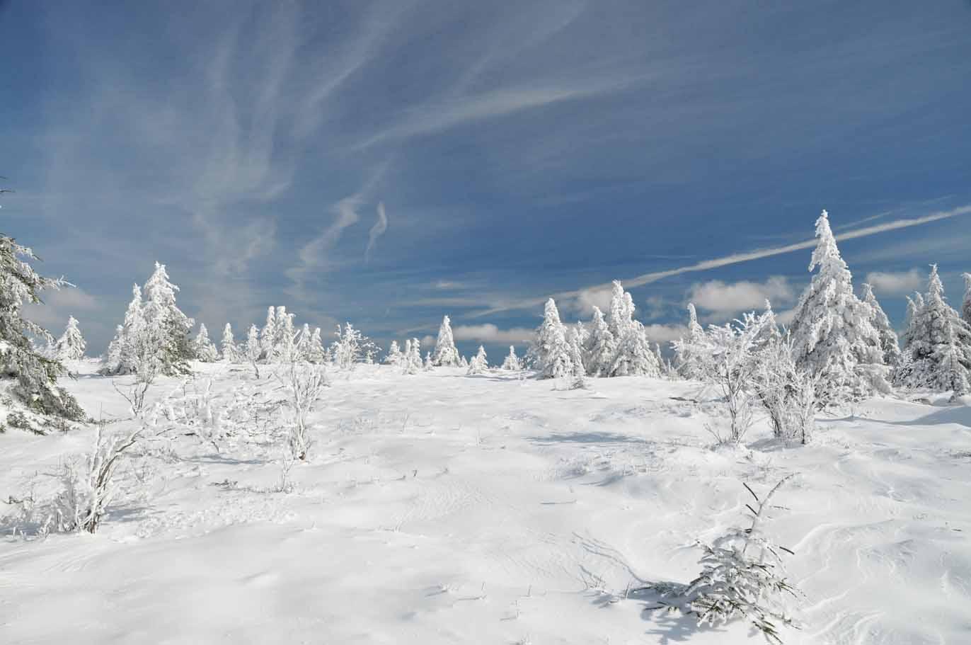 Winter in Dolly Sods