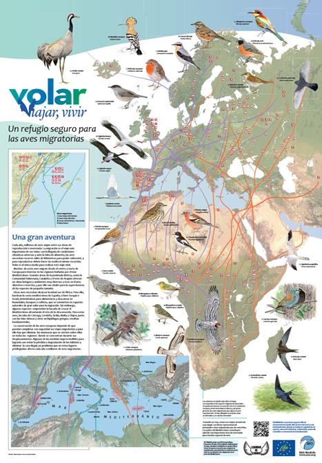 http://www.seo.org/wp-content/uploads/2013/10/Poster-migracion_VVV.pdf