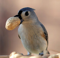 Bird with Nut