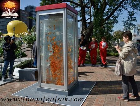 aquariumbooth03 أسماك في كابينة الهاتف