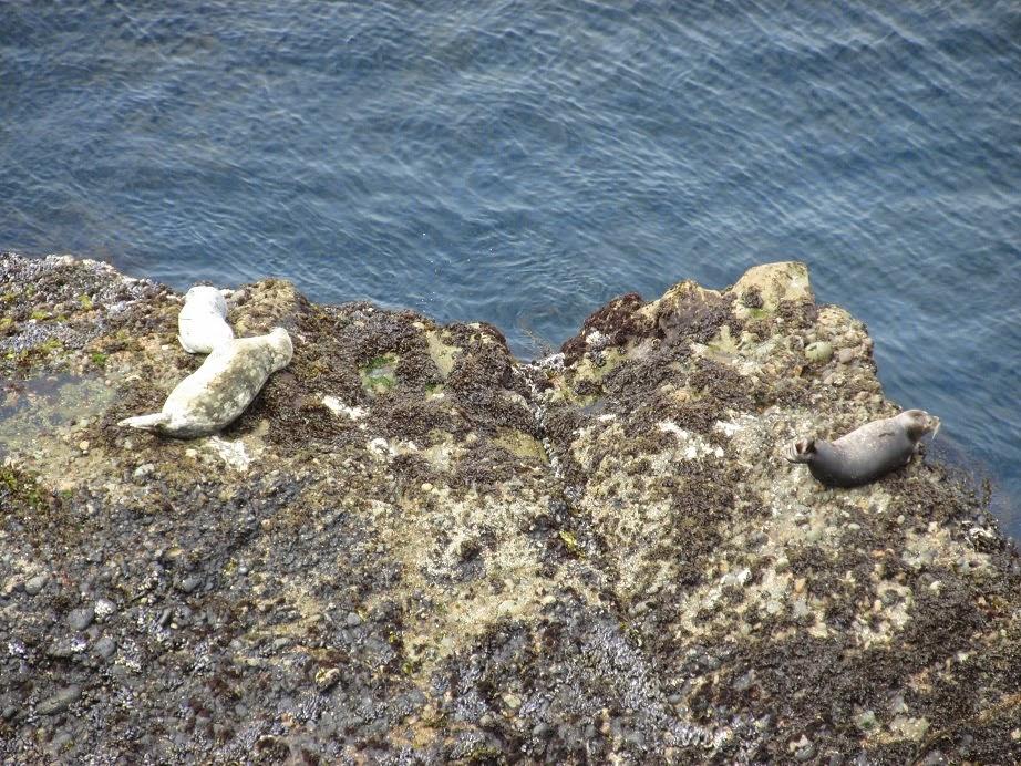 pacific ocean otters