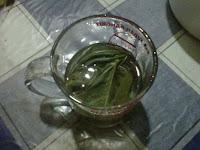 air seduhan daun jarak obat panas dalam