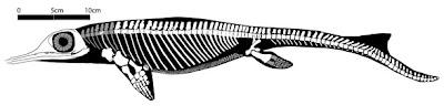 """Chaohusaurus"""""""