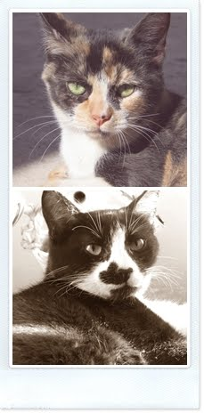 Mie gattine