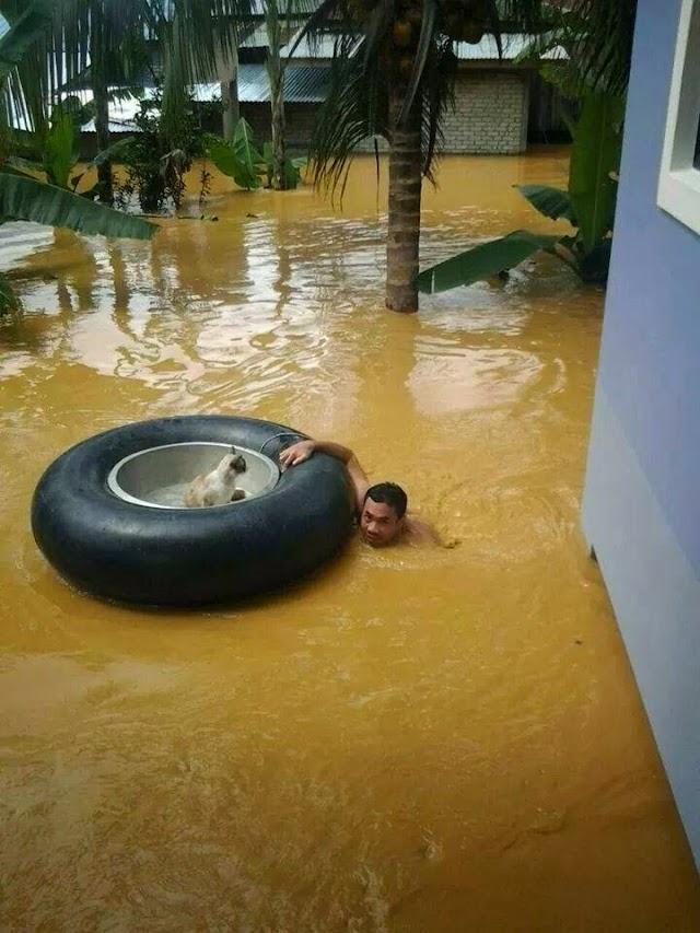 Insan Prihatin Selamatkan Kucing Dalam Banjir