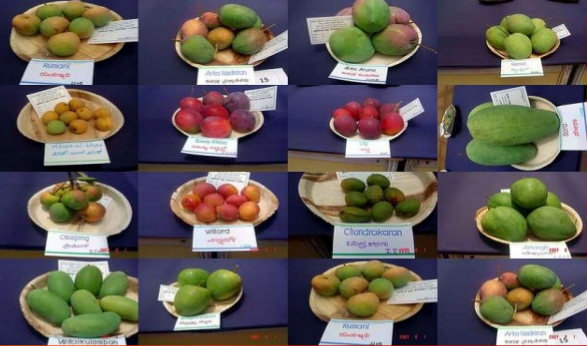 Famous varieties of Mangoes in India