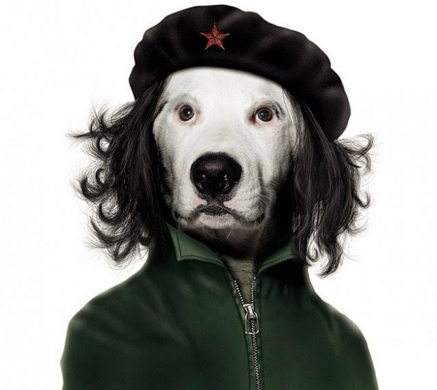 a dog posing as Che Guevara