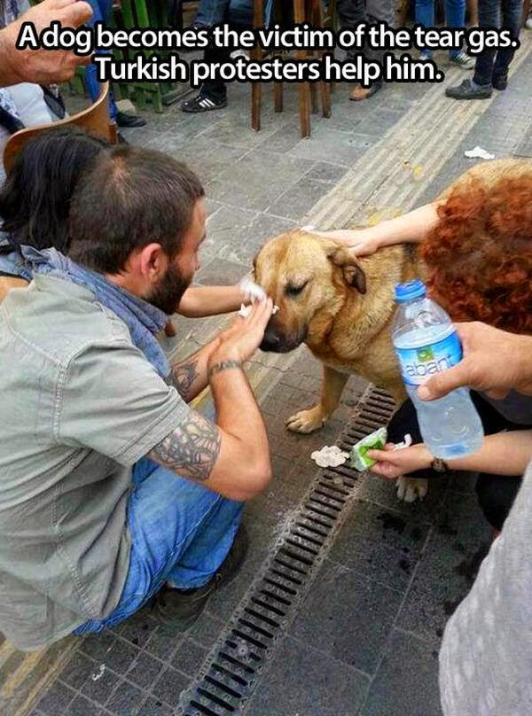 People doing amazing things for animals (28 pics), turkish protesters help a dog who become the victim of tear gas