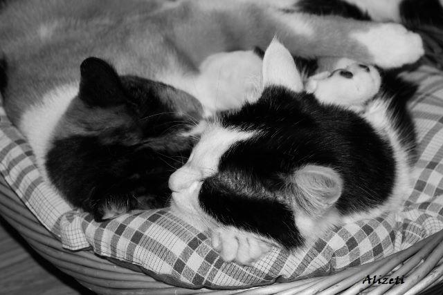 Katzen Schmusekatzen chillen entspannen kuscheln