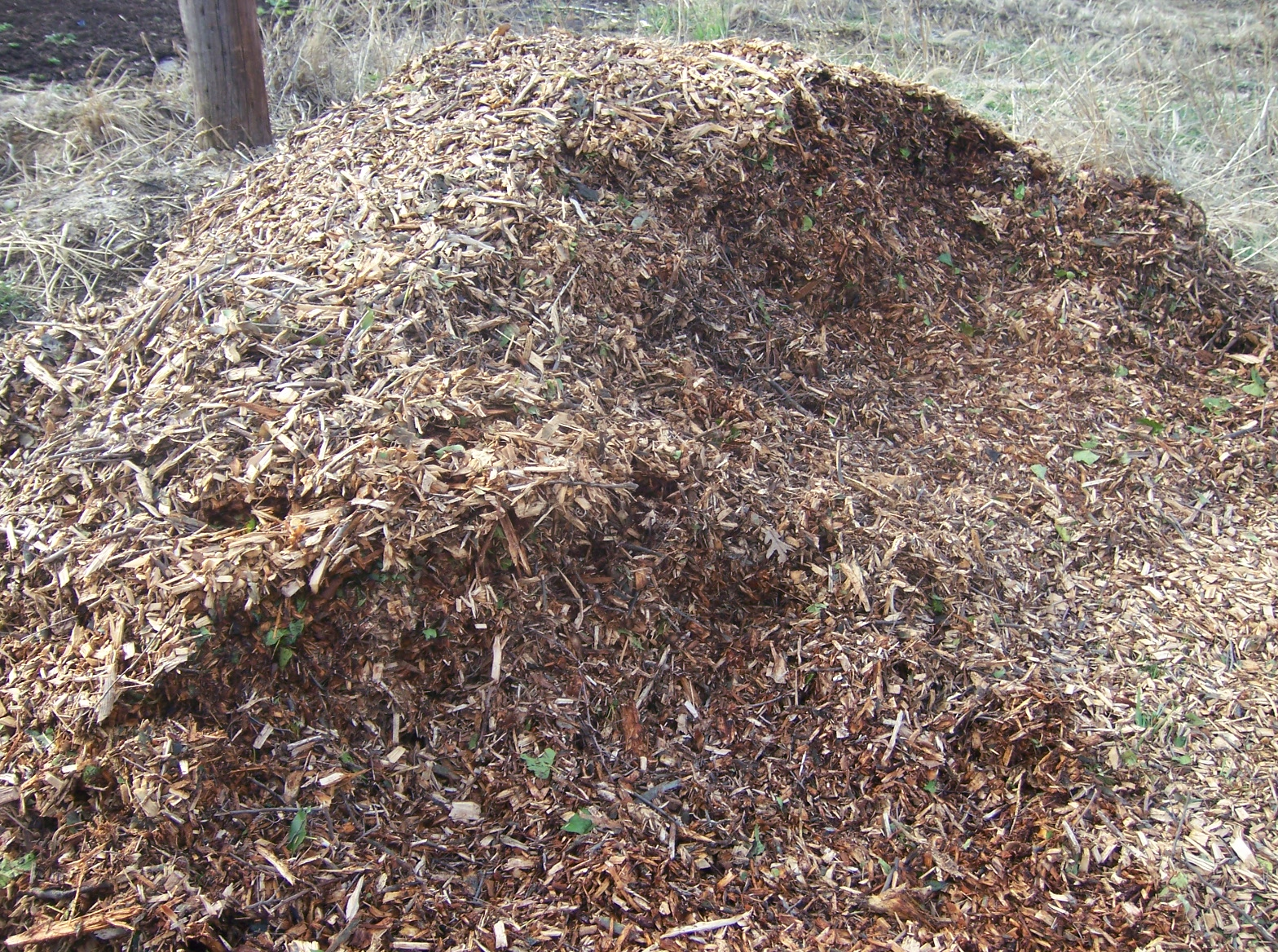 Wood Chip Gardening ~ From seed to scrumptious gardening with wood chips