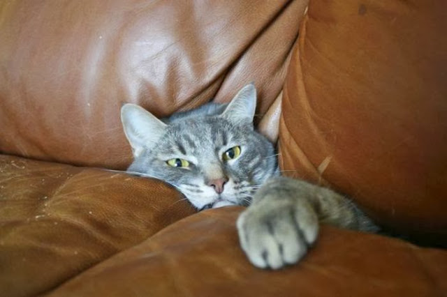 Funny cats - part 81 (40 pics + 10 gifs), cat pics, cat stuck in couch