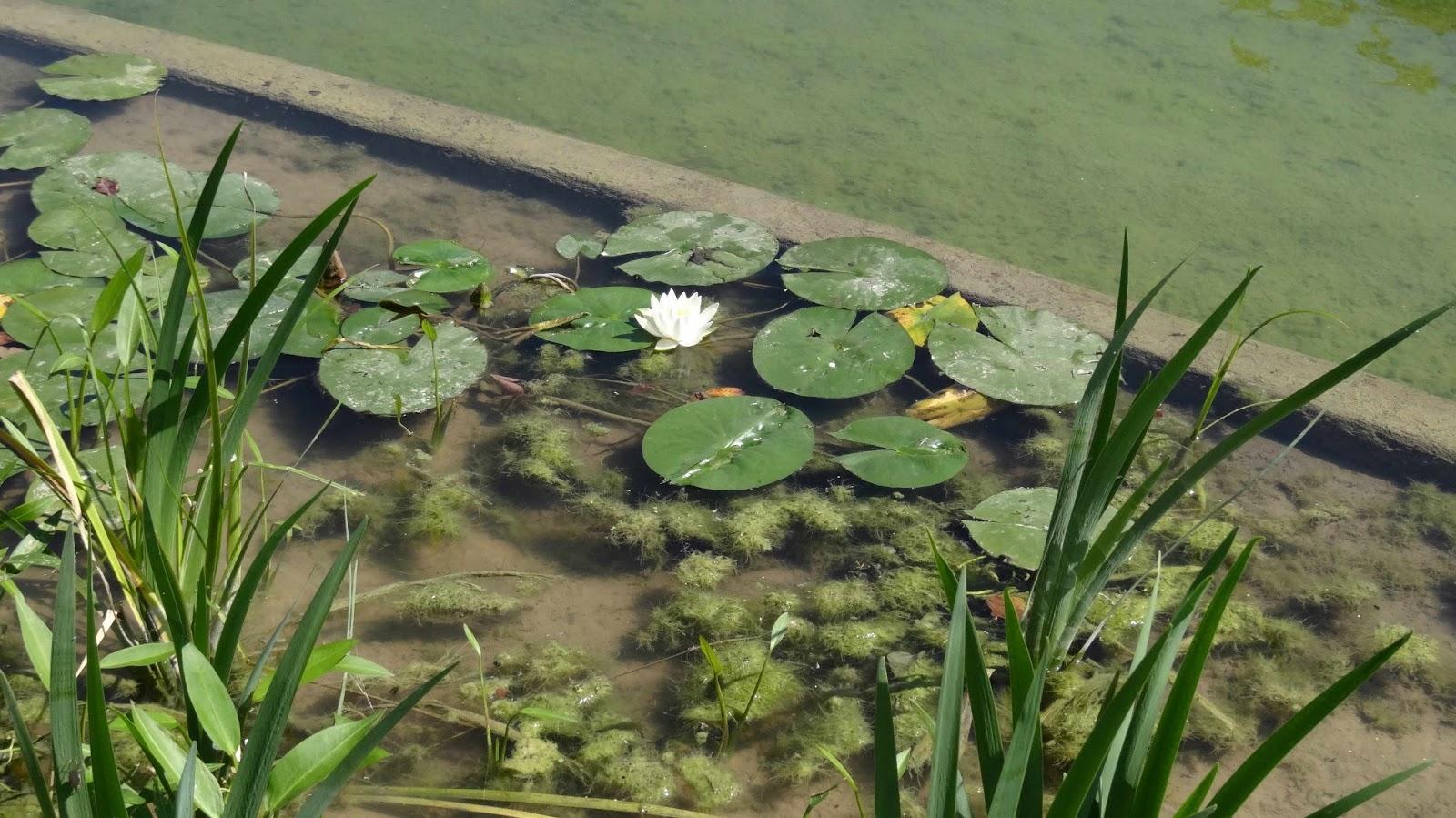 The Bayou Botanist A Tour Of Buffalo Bayou Park Part 2