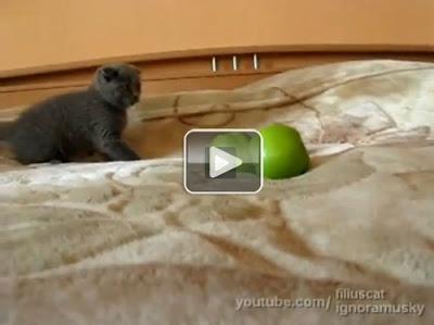 yeşil-elmadan-korkan-kedi-videosu-korku-filmi