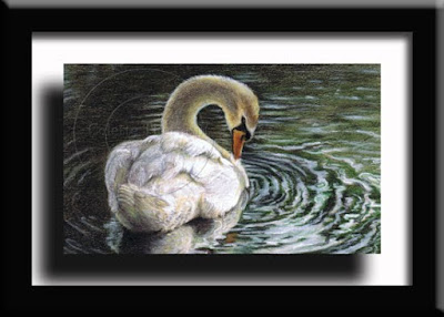 Mute Swan Bird Artwork by Colette Theriault