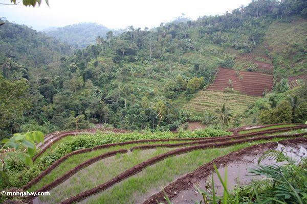 Asahan din daw natin na maganda ang Agrikultura sa ating bansa ngayong