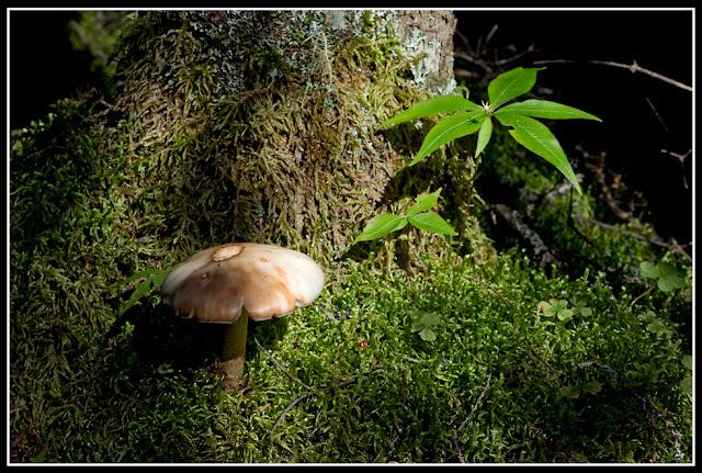 Nova Scotia; Gaff Point; Mushroom