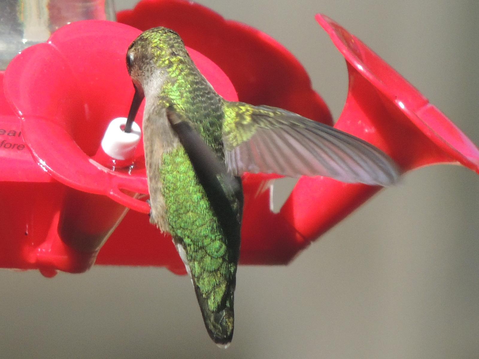 henry u0027s birdwatching blog backyard birding 9 12 12