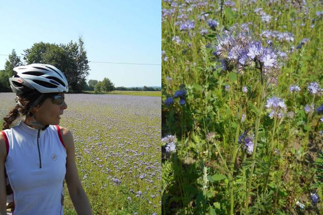 In bici il 4 di luglio