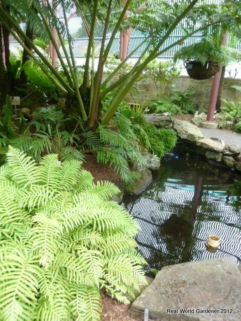 Real world gardener november 2012 for Tropical garden designs australia