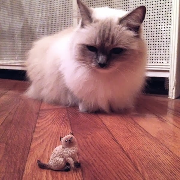 Funny cats - part 89 (40 pics + 10 gifs), cat looking at mini cat figurine