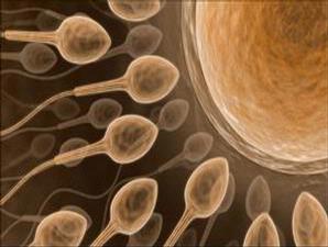 Fakta Tentang Sperma